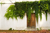 Door with Vine #012