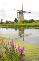 Windmill and Flowers #034