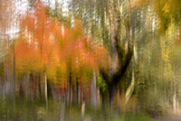 Painterly Autumn Colors #365