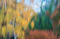 Painterly Autumn trees #8449